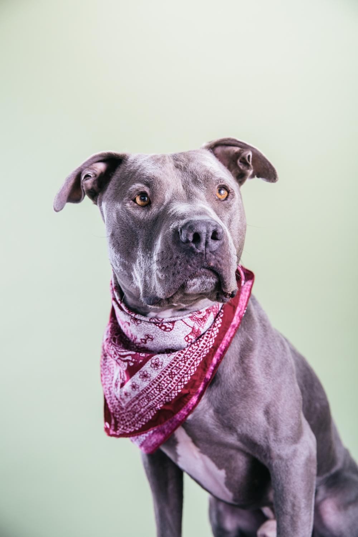 Smolowe_CHEWSLIFE_Dogs-142016.jpg