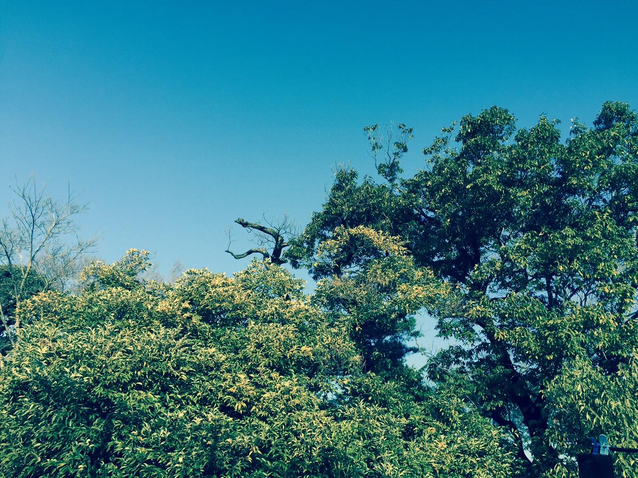 1日一回は空を見上げてみるなどの小さな一歩でもいいとおもうんです... It is ok to be a very small step, such as looking up at the sky once everyday! That might change your mood and energy level...