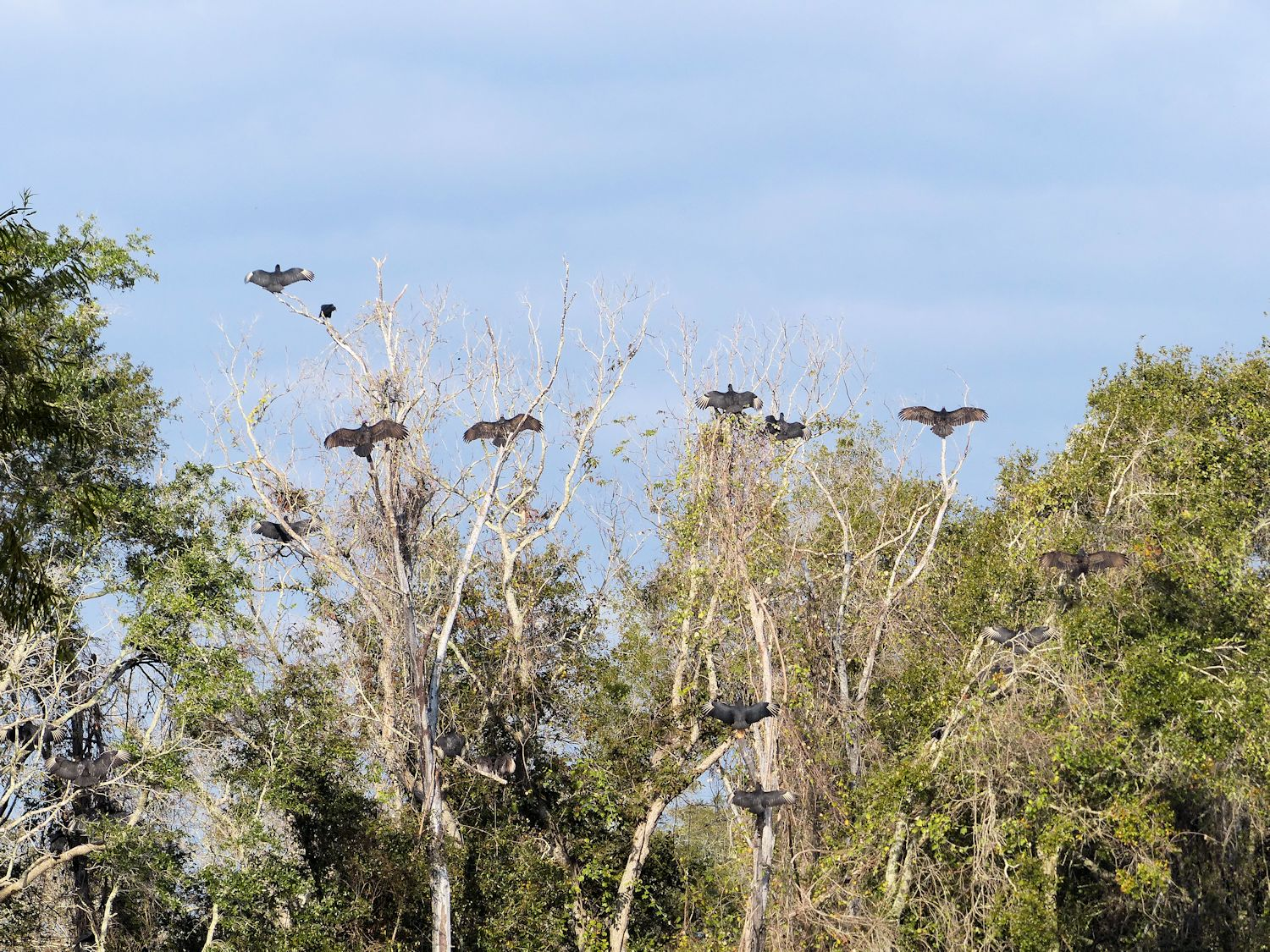 Vultures in the sunshine