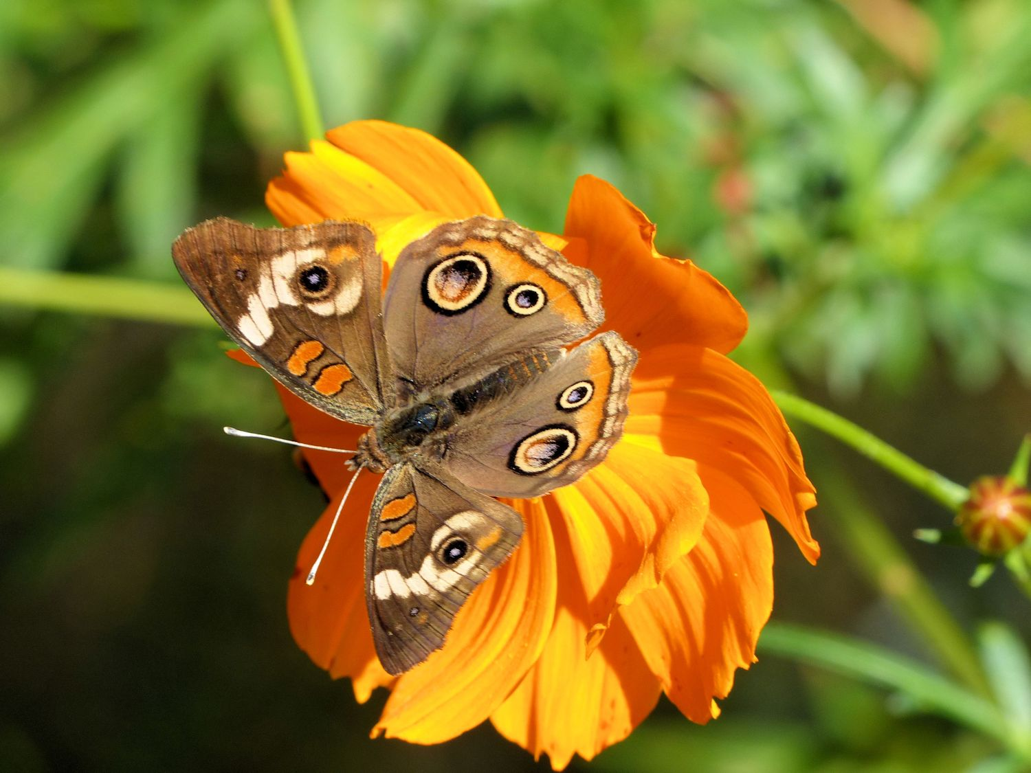 Orange flower and butterfly with eyes