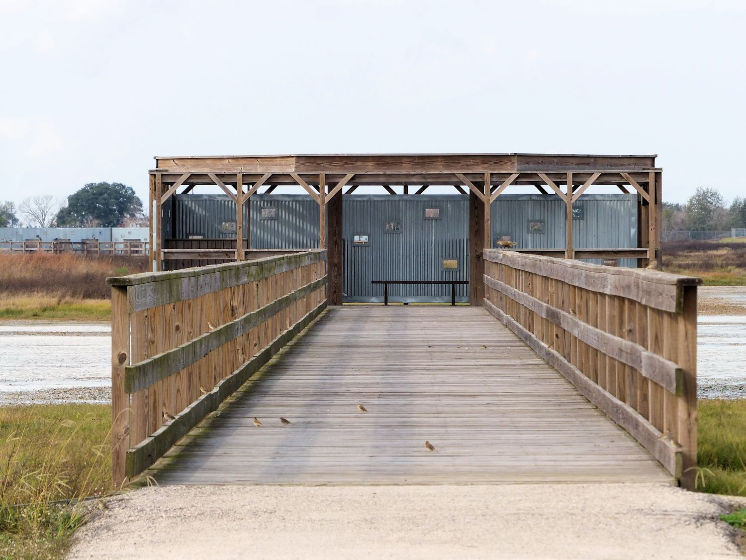 Elevated walkway out to blind (with Savannah Sparrows on the walk and rails)