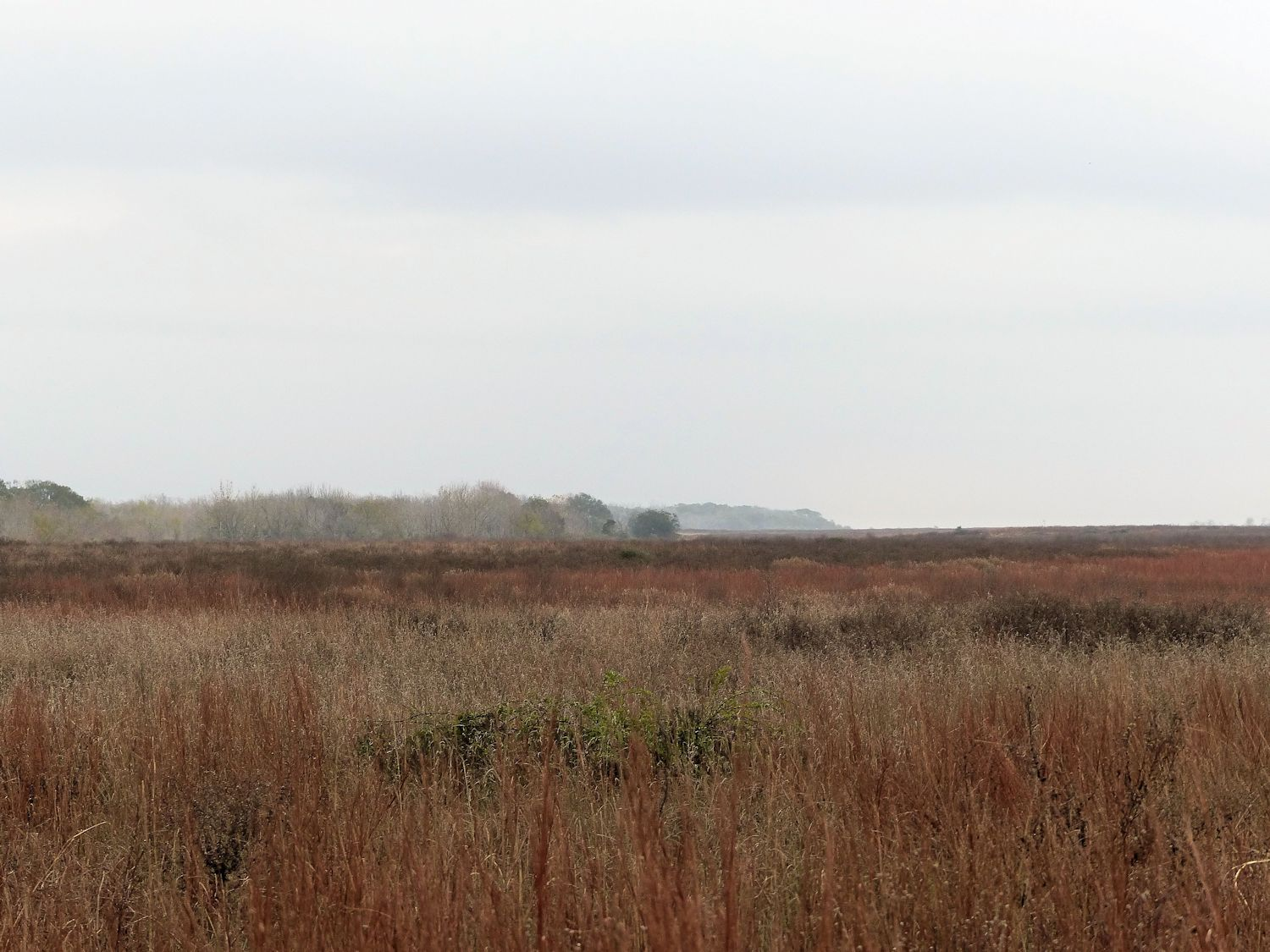 Attwater Prairie Chicken Refuge - those are just trees in the distance. Not mountains, Carolyn.