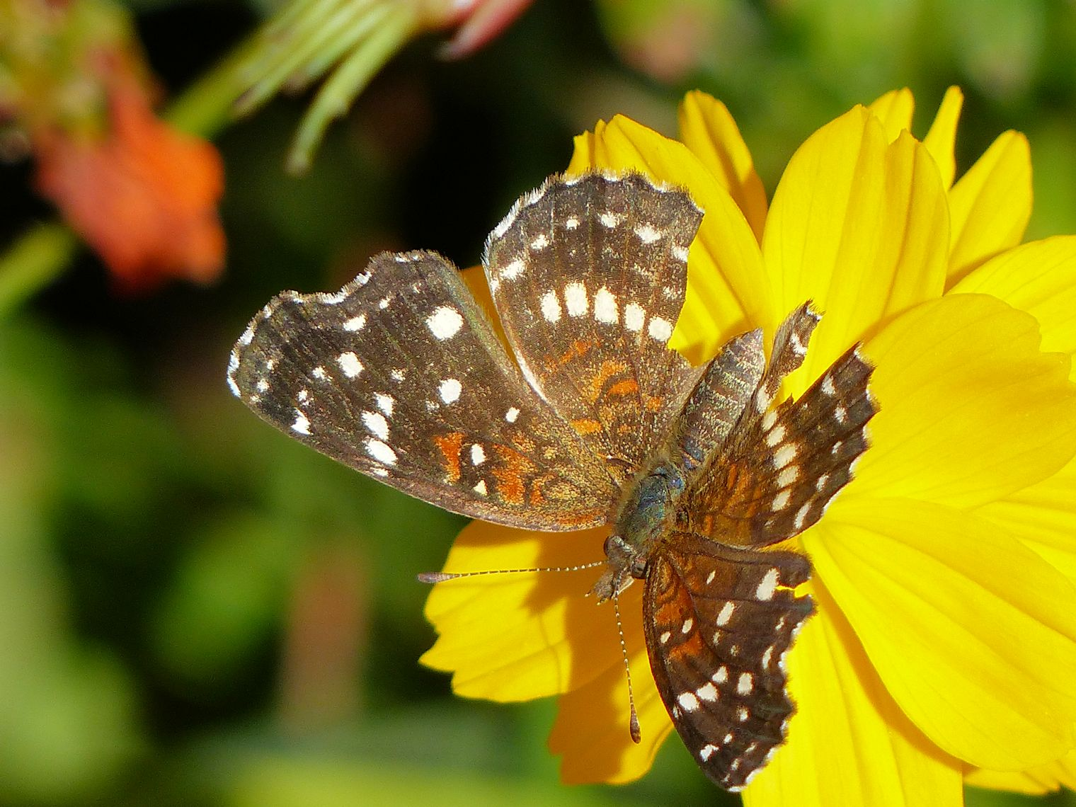 Yellow flower and butterfly