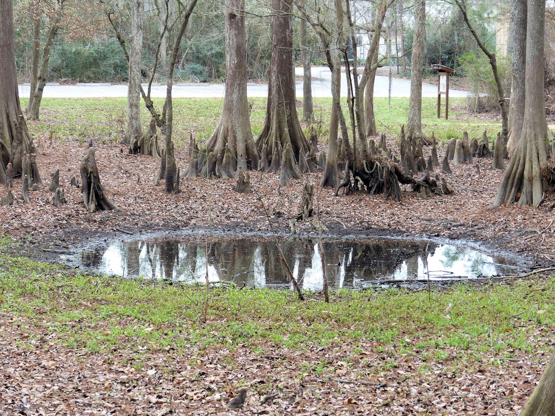 mercer_swamp_feb_1500.jpg