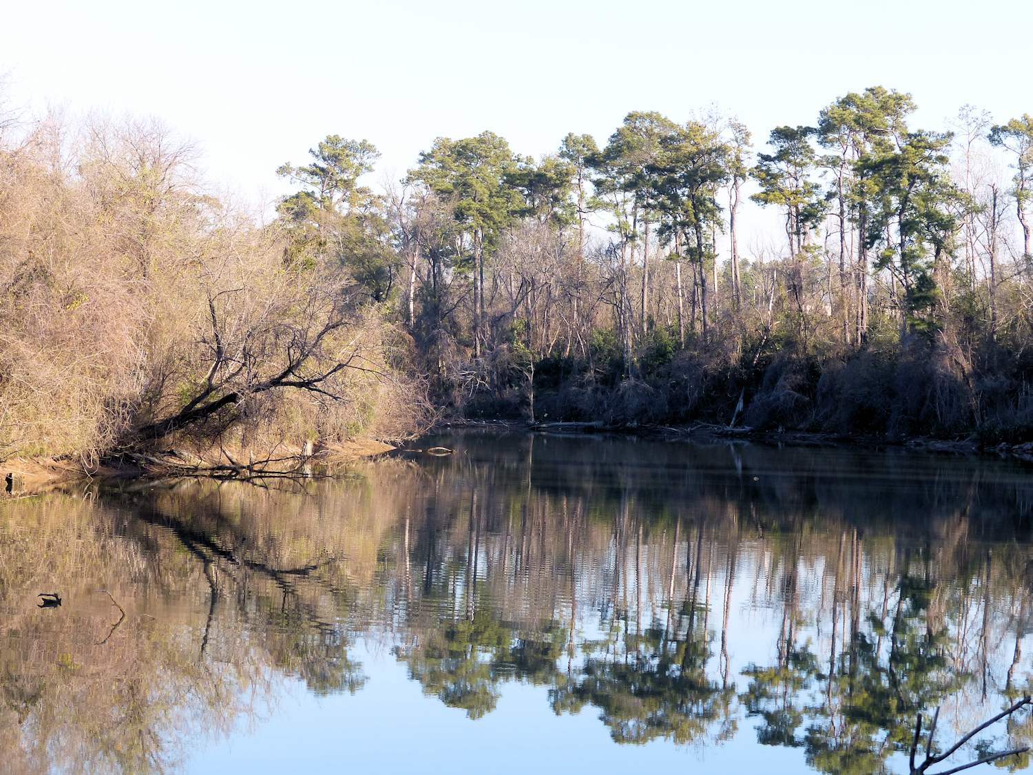 Reflections in the Undisclosed Bayou