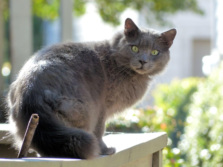 Dark gray kitteh looking all startled
