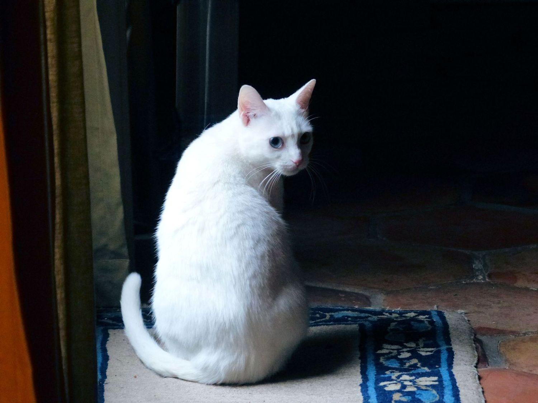 La La Luna White Skitter Kitteh