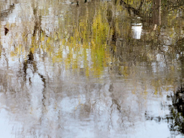 Reflection in standing water in my neighborhood