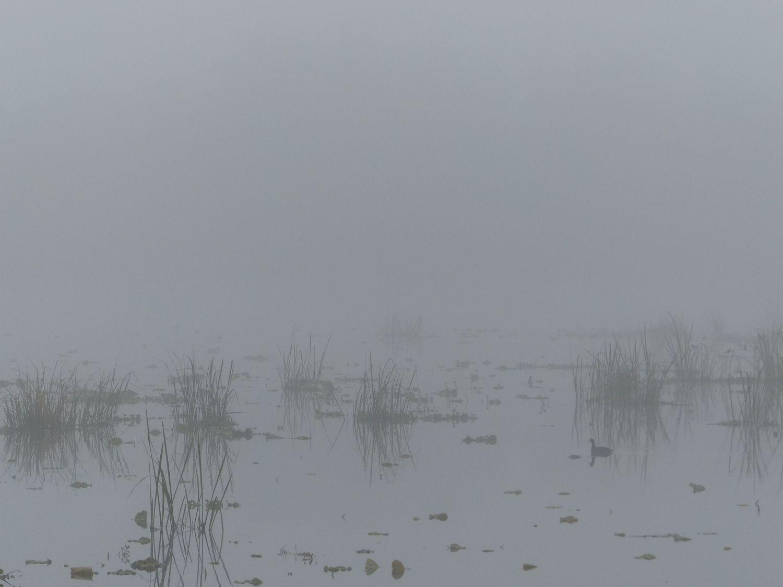 Foggy 40-Acre Lake, Brazos Bend State Park