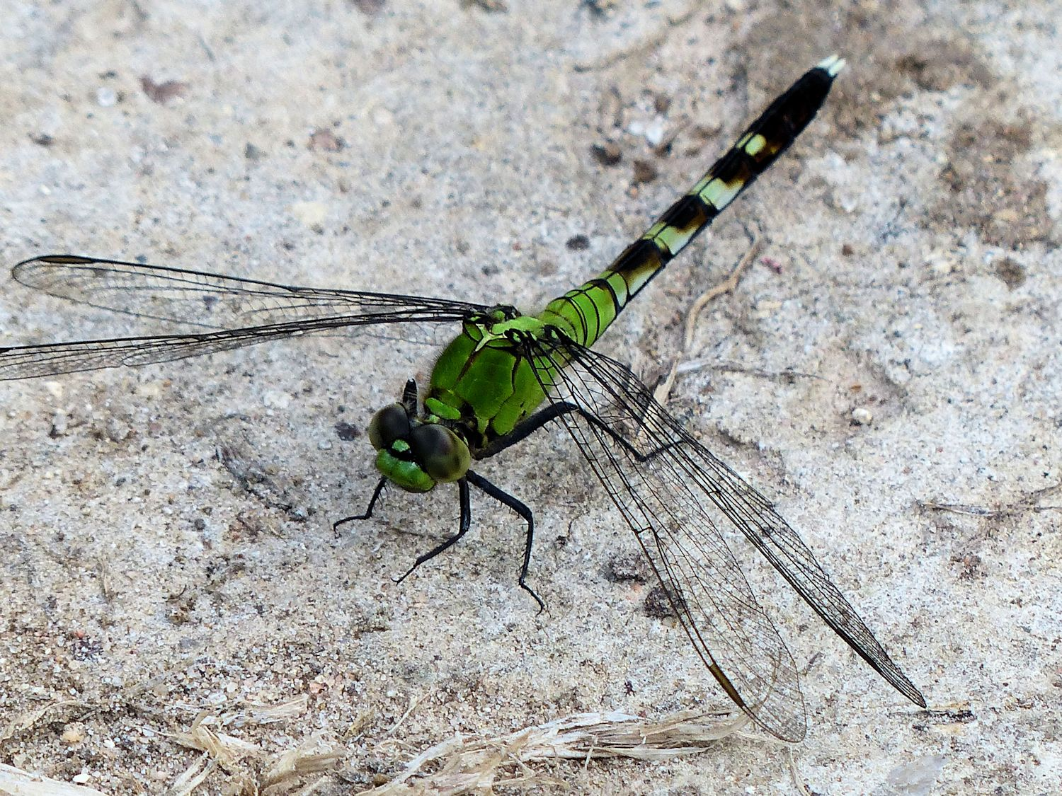 Unknown type of Green Dragonfly