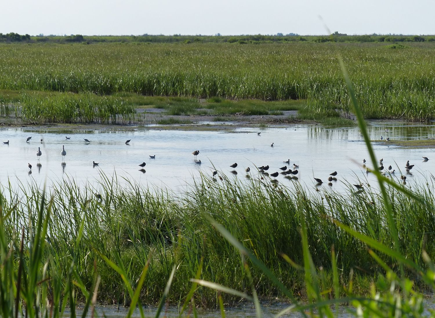 Birds on the shallow ponds