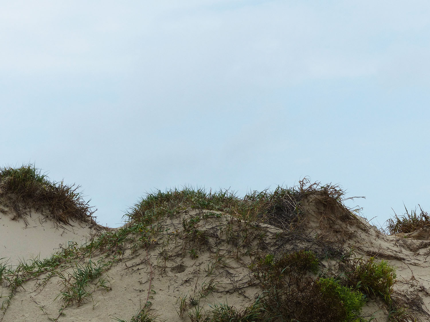 Sand dunes at Mustang Island State Park