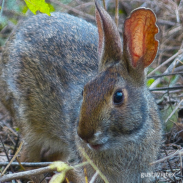 Bunny from Brazos Bend