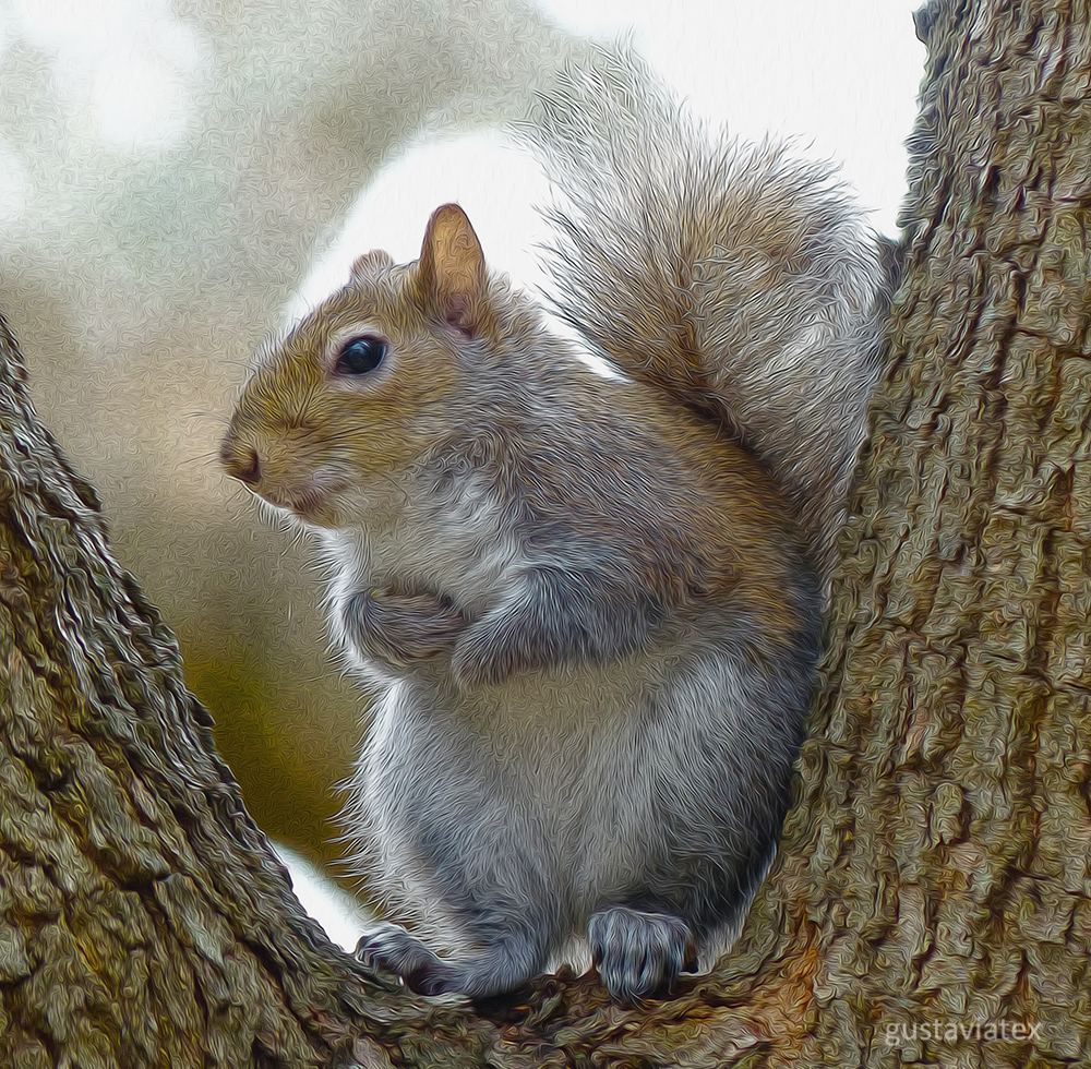 Fave Squirrel with new edit