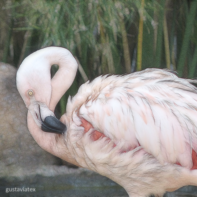 Flamingo from the Zoo