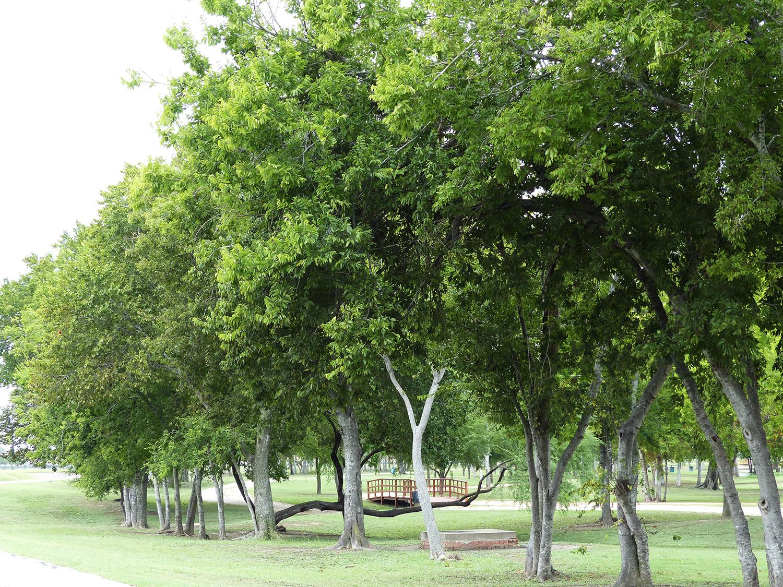 Park area north of Brays Bayou