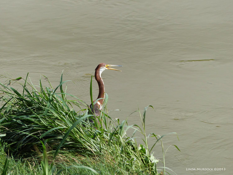 A bird on my side of the bayou