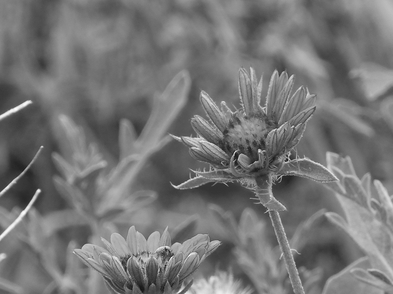 Same plain photo made into Black and White