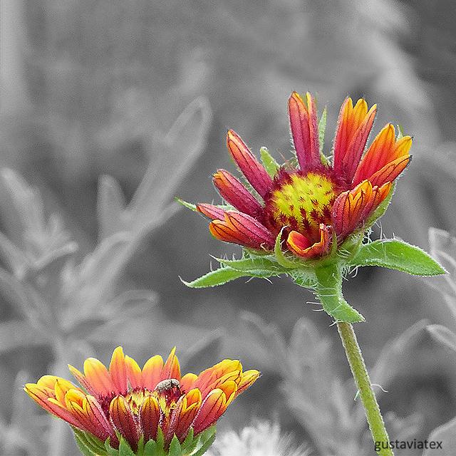 Color splashed flowers