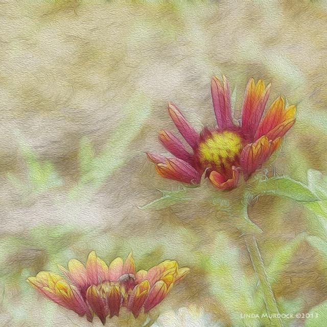 New version of wildflowers