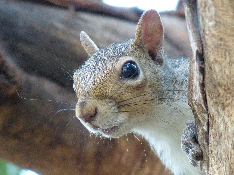 Squirrel Snapshot