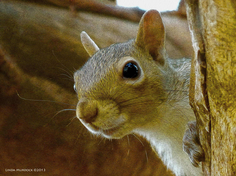Squirrel Snapshot looking much better