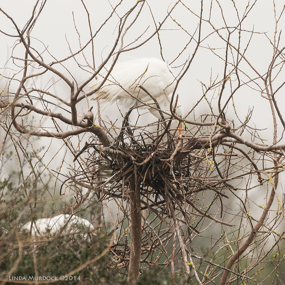 Nest with egg!    Sony A700 with 70-400mm 1/2000 sec. f/6.3 ISO 1600