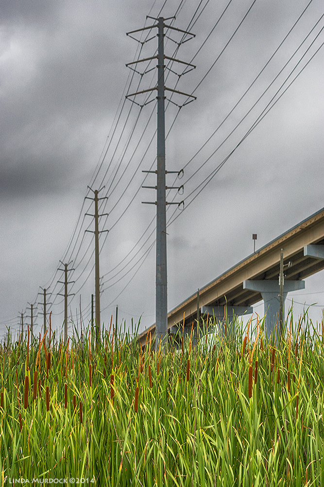 Under the overpass of Hwy 1495 and the Intracoastal canal    Sony A77 II with 70-400mm G21/1250 sec. f/8.0 ISO1000