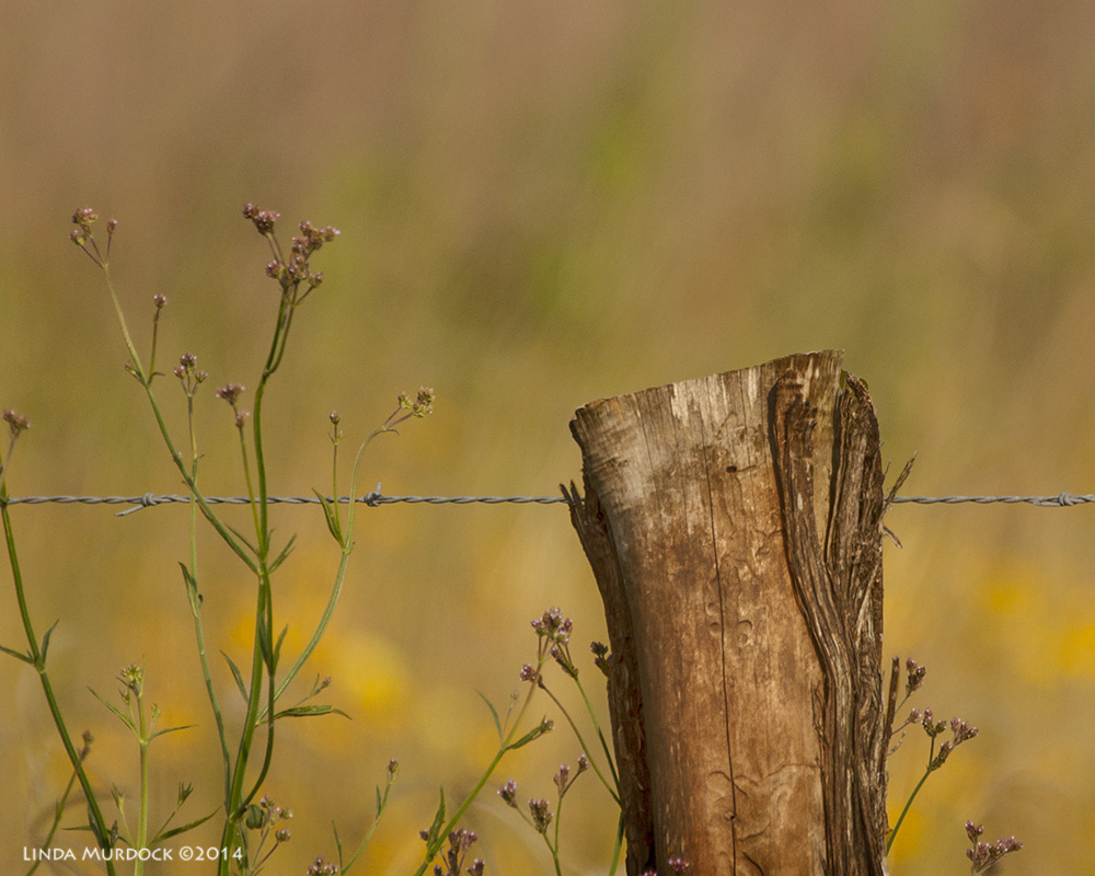 I didn't talk to the fence post; only took its photo!    Sony A700 with 70-400mm G1/3200 sec. f/5.6 ISO400