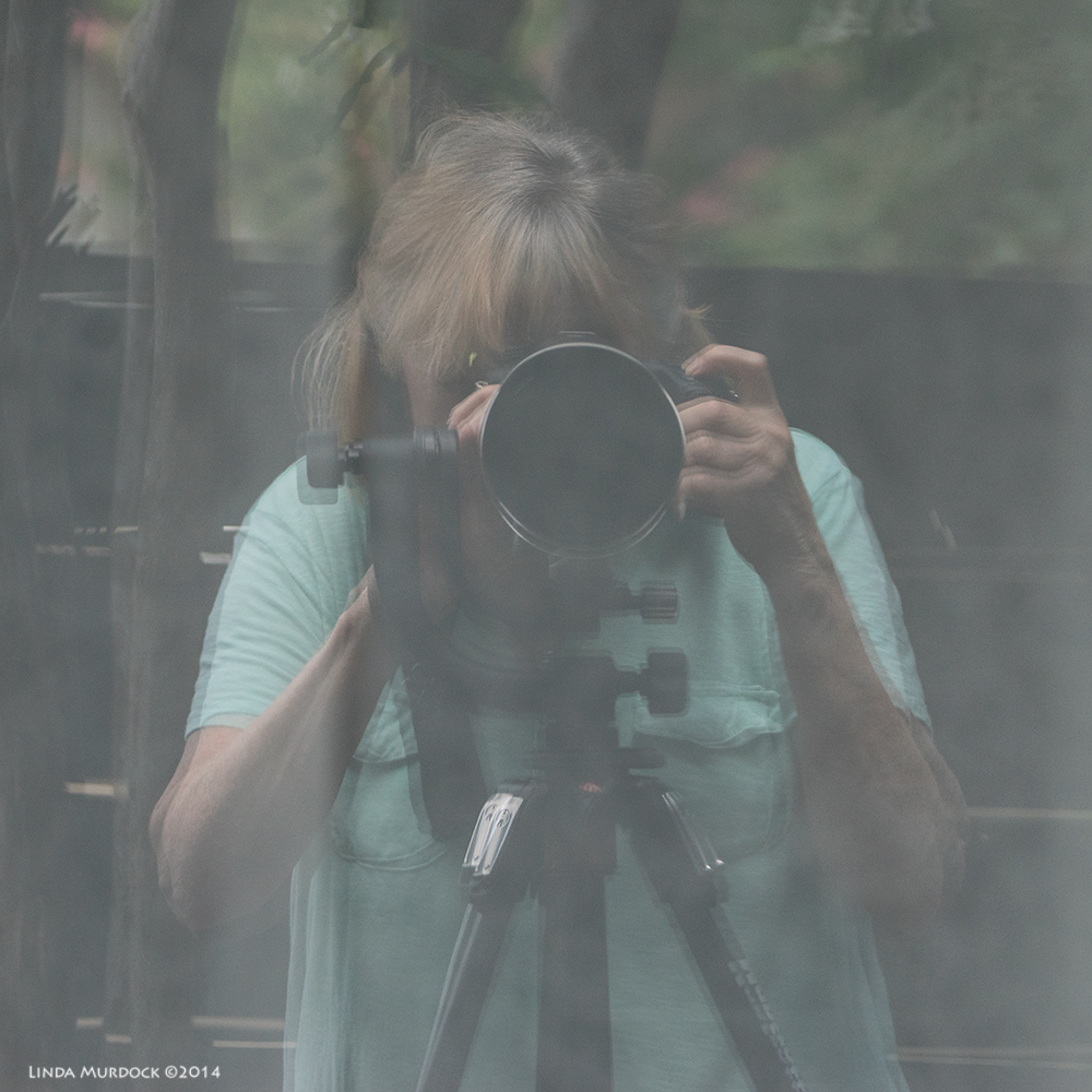 Linda's reflection selfie - I was looking at my sliding glass door from the garden.