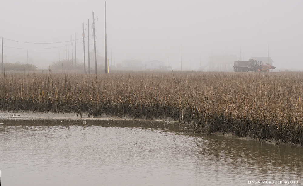 The Clapper Rail Memorial Pond at Surfside- it was quite foggy that day    Sony A77 II with 70-400mm G21/1600sec. f/7.1ISO 1000