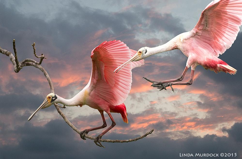 Slide Show Of Some Of My Bird Photos >> Buy My Stuff Linda Murdock Photography