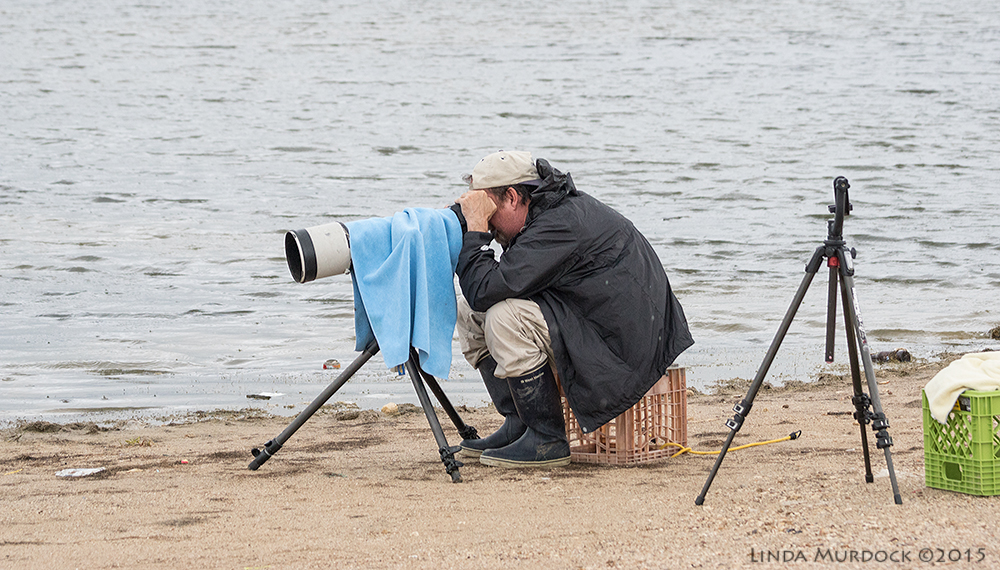 The glamorous life of a wildlife photographer