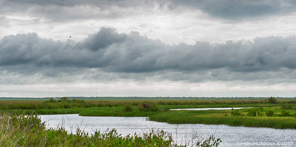 Brazoria marsh and storm coulds    Sony A77II with Sony 70-400 G2 f/6.31/640 sec ISO 1000