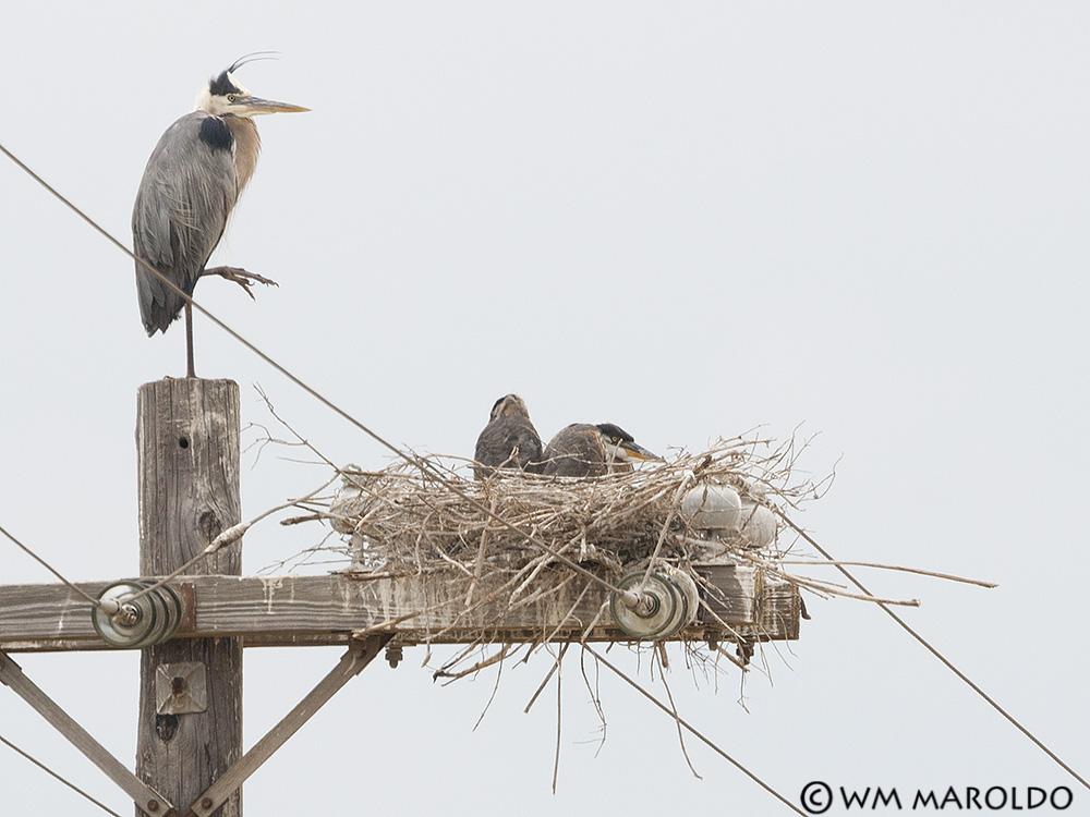 BW's little family~ Photo by William Maroldo