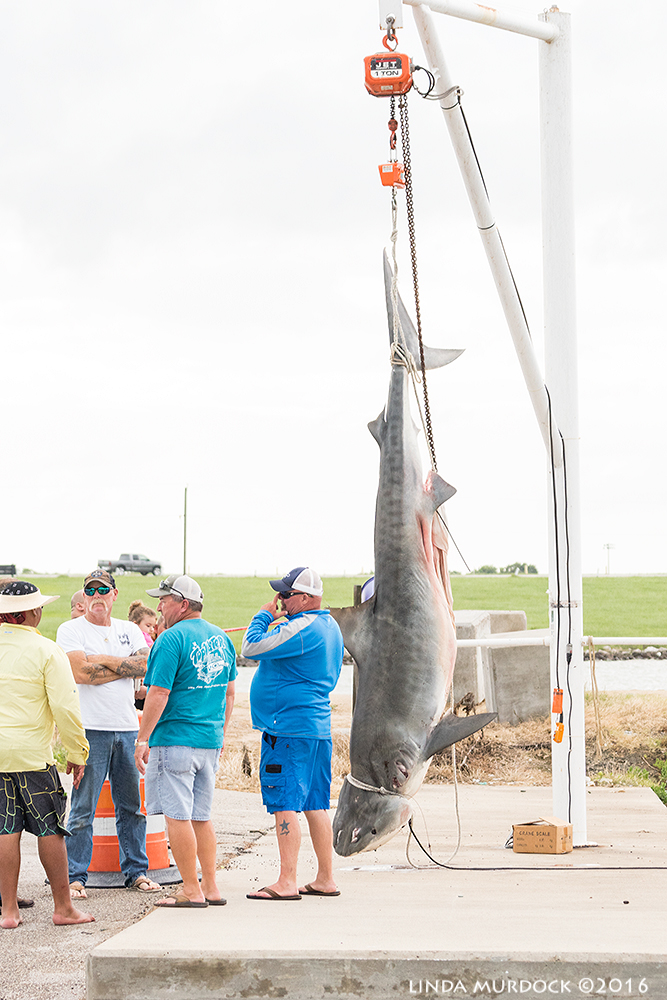 Texas-sized catch   Sony A77II with Sony 70-400 G2 f/5.6 1/1000 sec ISO 1250
