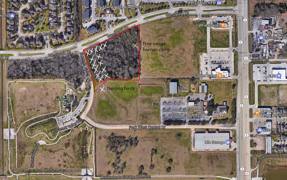 McClendon Park is just southwest of the wooded tract with the nesting birds. This is near the intersection of Hwy 6 and Westpark. Best viewing from the curb on Summit Valley. Map via Google