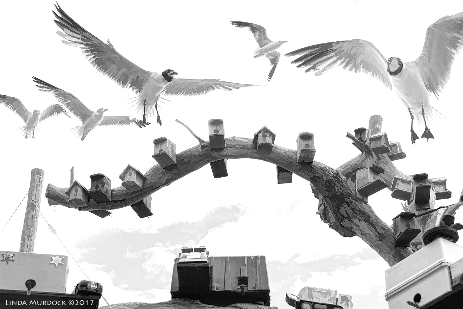 Gulls checking out the real estate market