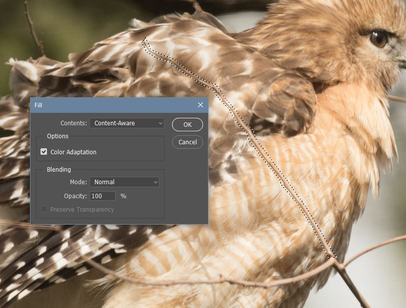Using Content Aware Fill from Photoshop