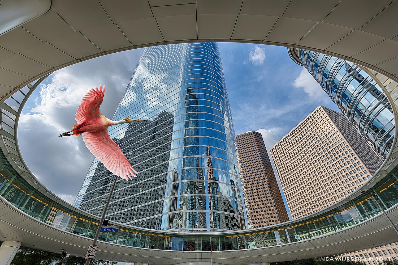 City bird...