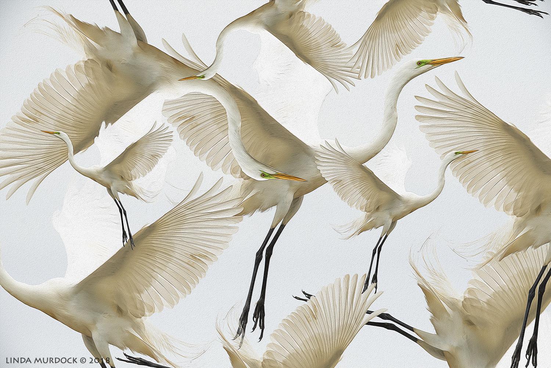 All the pretty egrets...