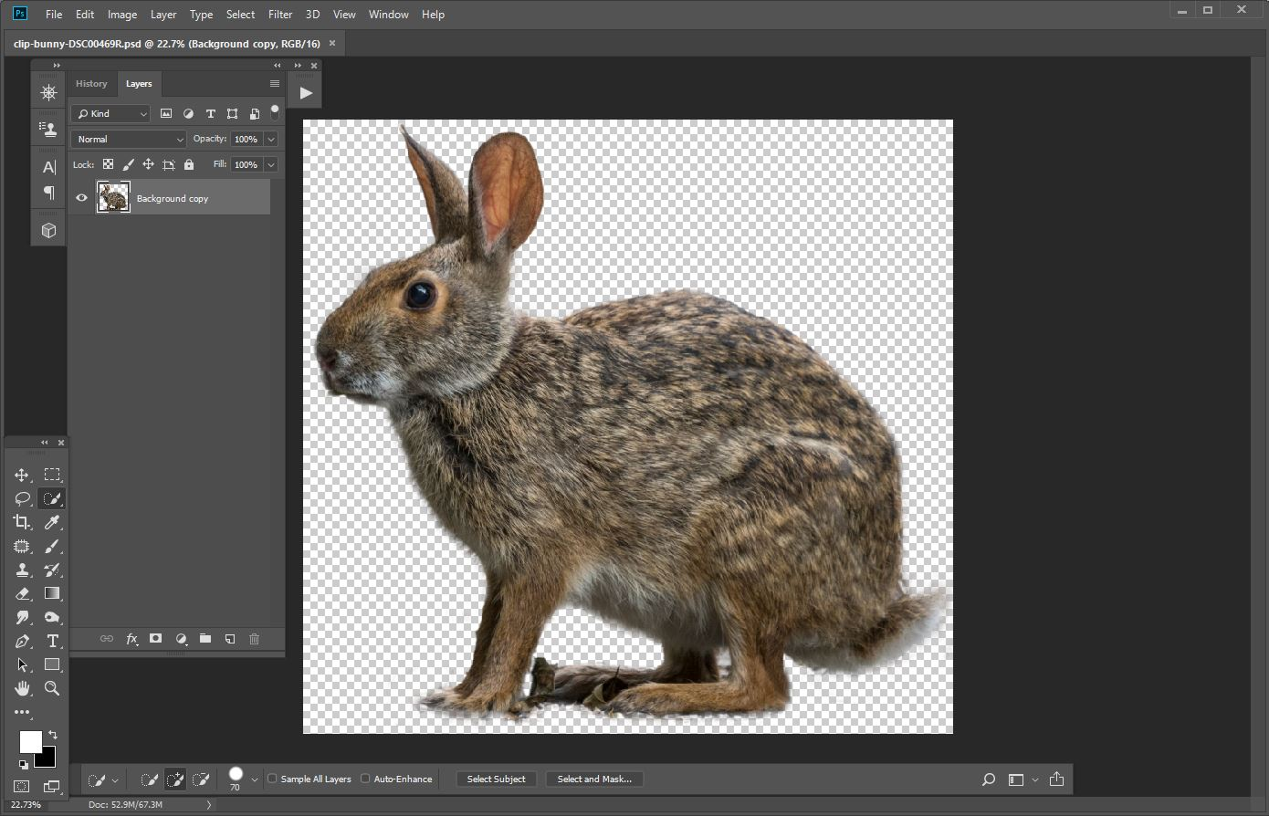 Bunny clip opened in Photoshop