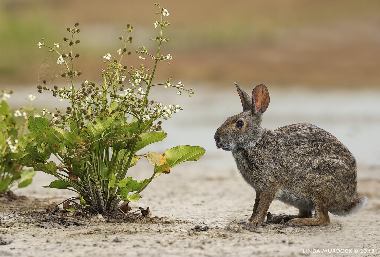 Bunny and the bush...