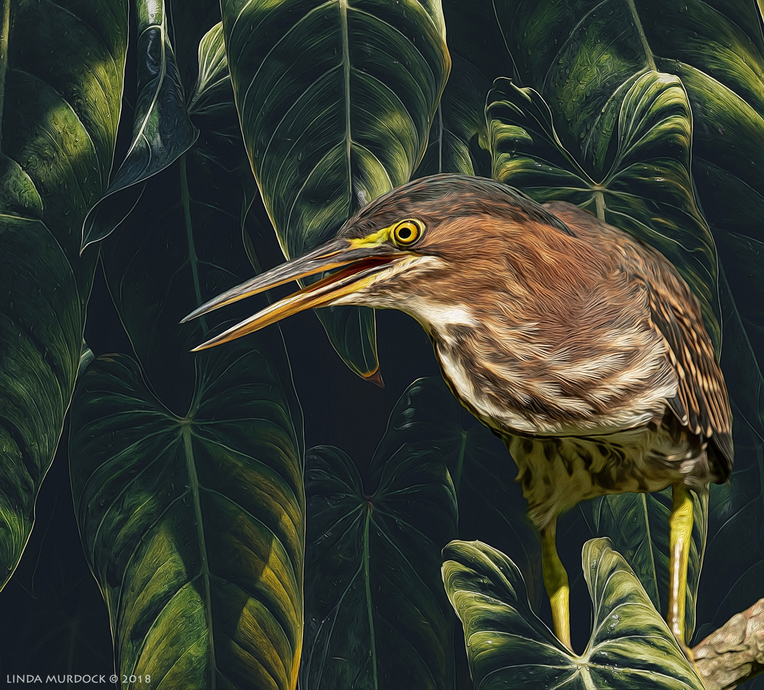 Green Heron in new habitat and enhanced with Topaz Glow and Photoshop Oil Paint