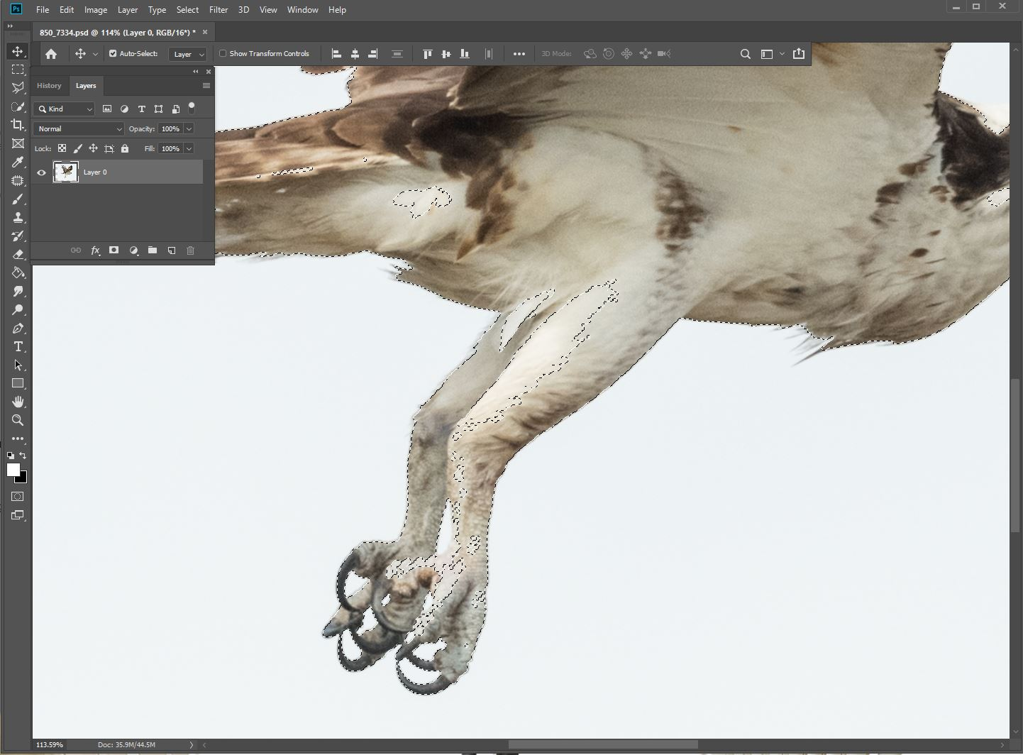 Zoomed in shows the    Select > Similar    also got some similar toned areas ON the bird. We have to fix that.