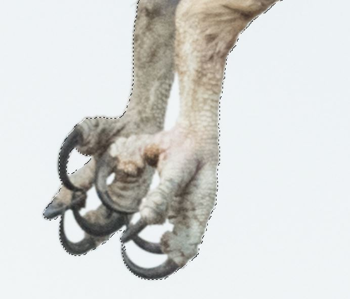 Light areas between his talons need to be SUBTRACTED from the selection with Subtract selection option