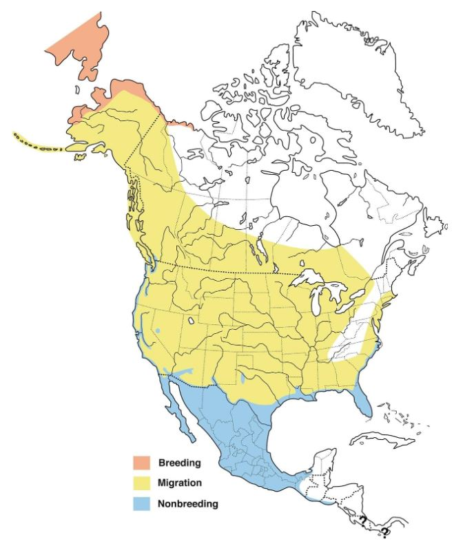 Long-billed Dowitcher map