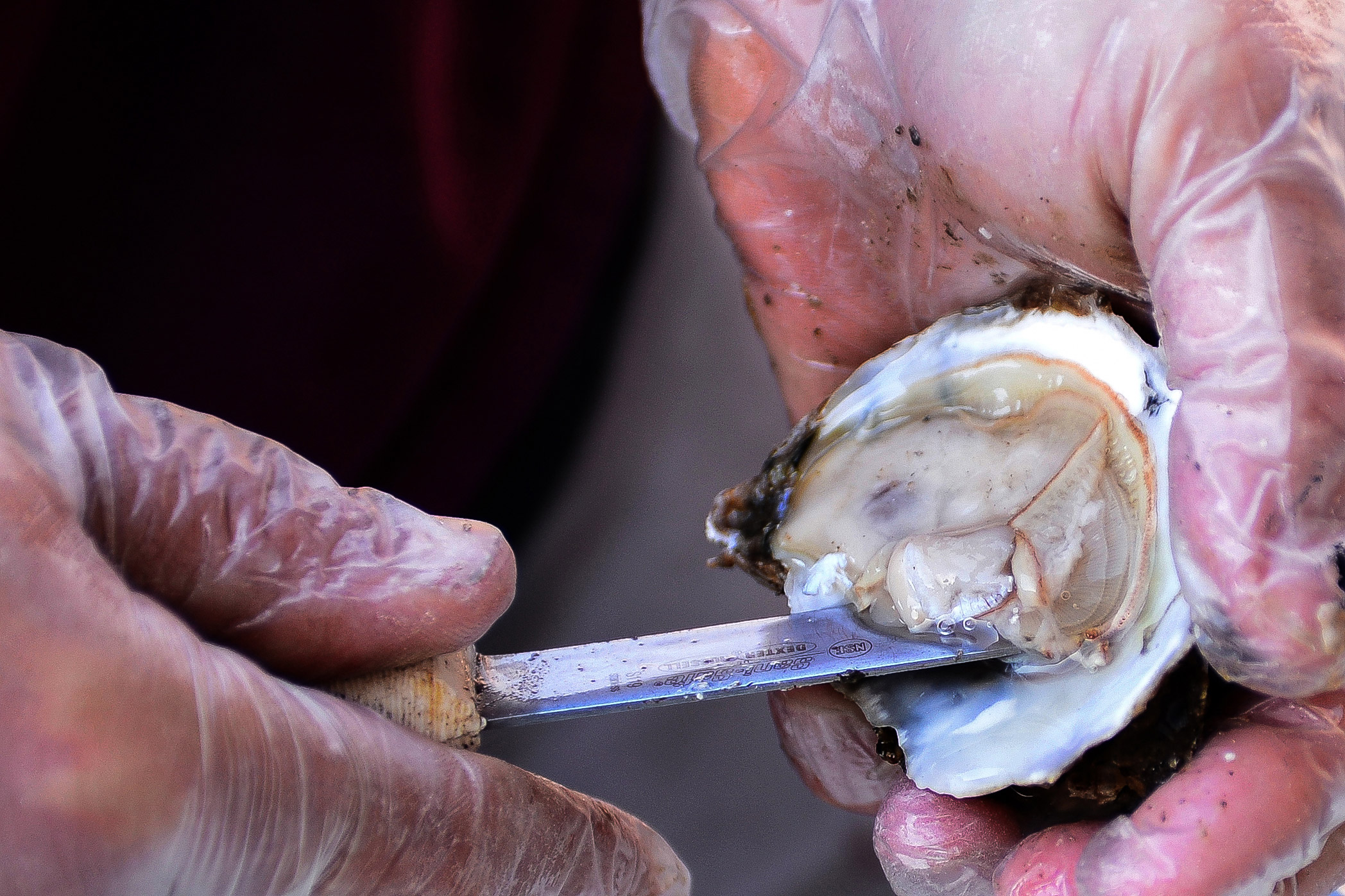 Bruce Reamer of Salerno's prepares oysters for lunch.