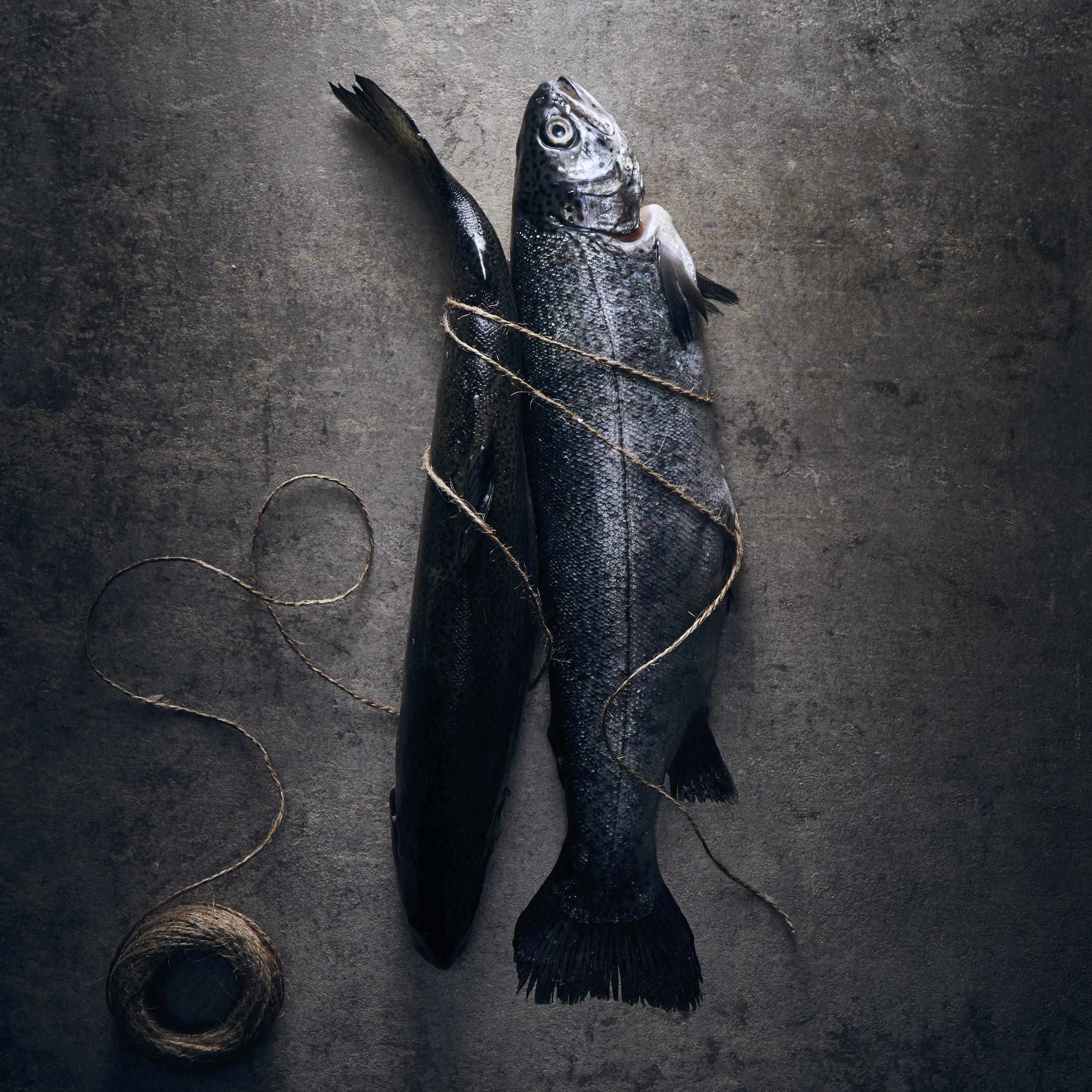 Fish 2_135.jpg