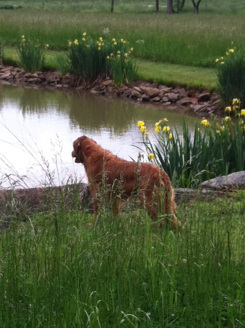 This is Barley. He knows everything about this pond.
